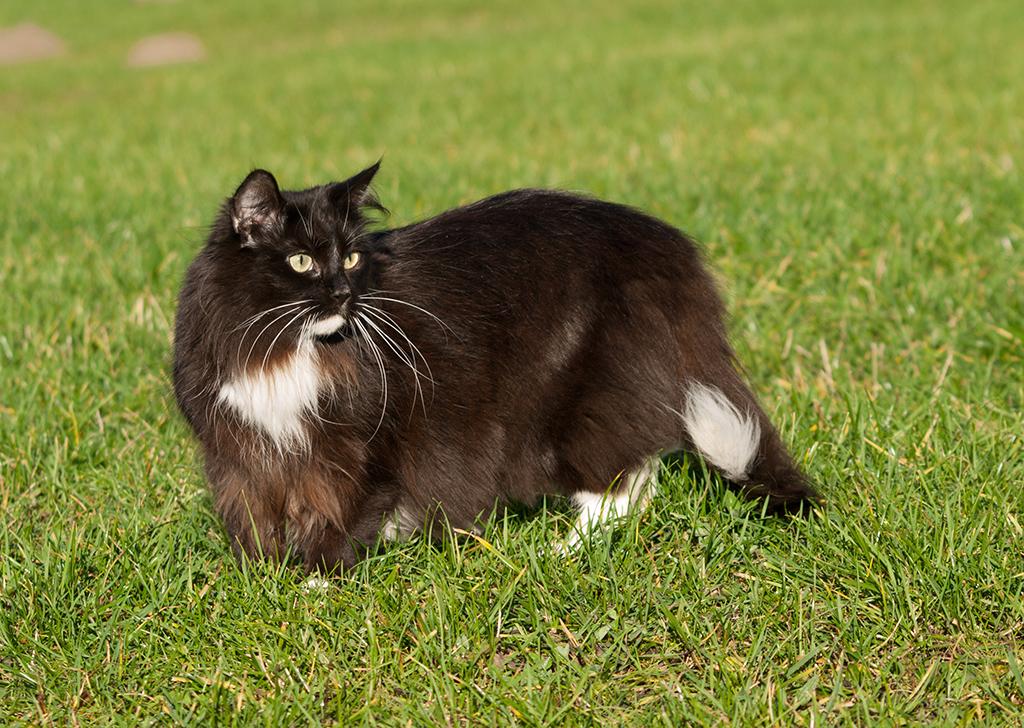 Acné felino, ¿qué debes saber sobre él?
