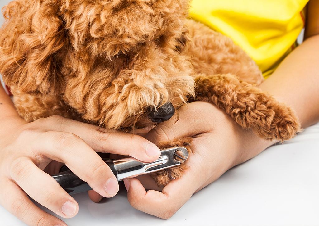 Consejos para cortar las uñas de nuestro perro