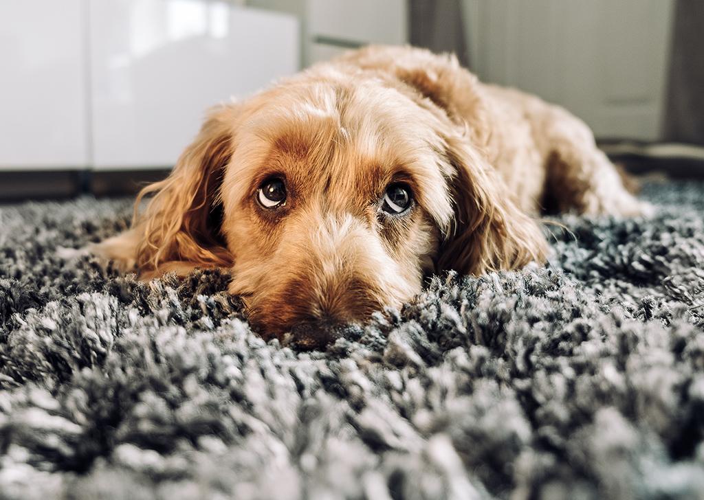 5 patologías frecuentes en los ojos de los perros