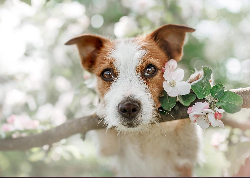 Alergia primaveral, también en nuestros animales