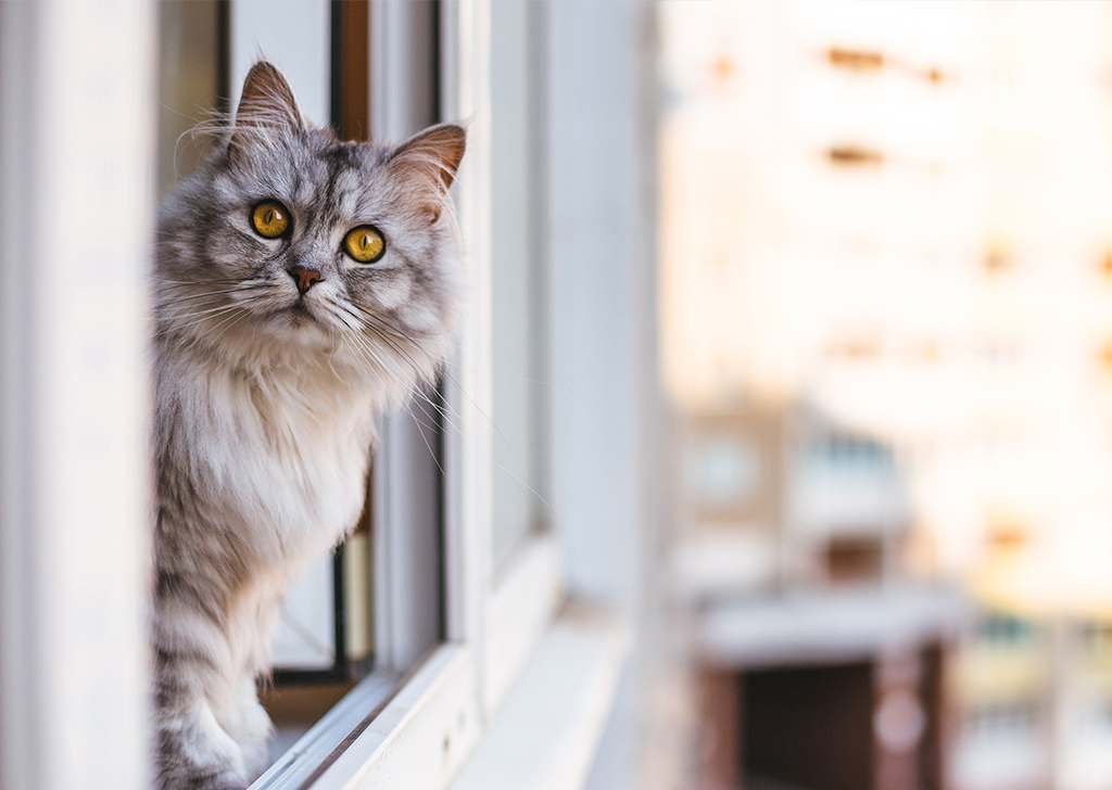 Síndrome del gato paracaidista, ¡protege tus ventanas!