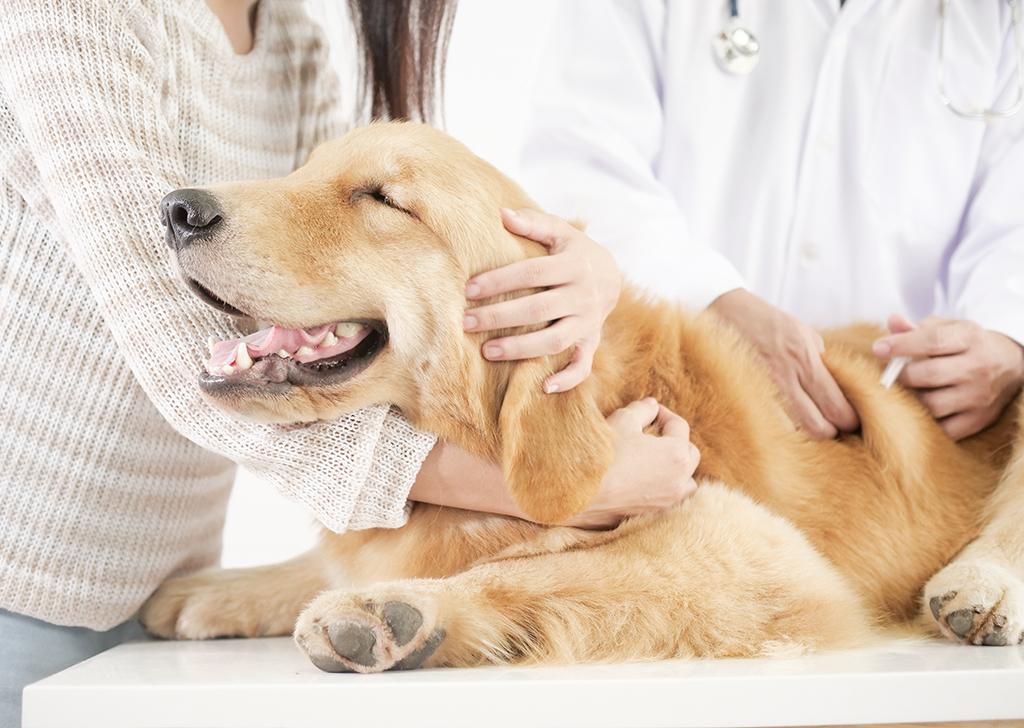 Semana Mundial de la Inmunización, ¡vacuna a tu mejor amigo!