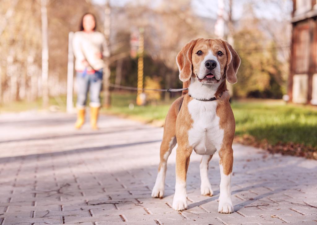 Sigue los mandamientos del paseo perruno y ¡disfruta de tu perro!