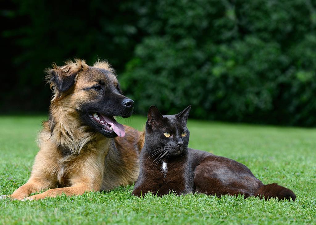 Tu perro o gato también puede padecer diabetes, ¿sabes cómo detectarla?