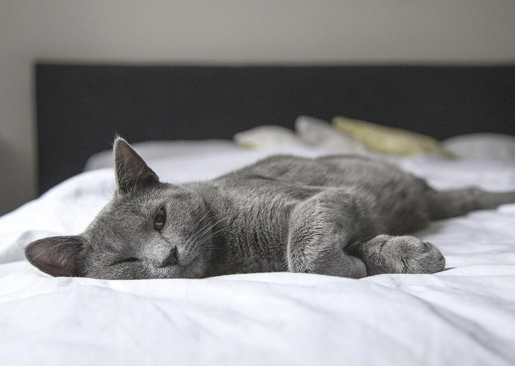 Llegan las vacaciones y, ¿con quién dejo a mi gato?