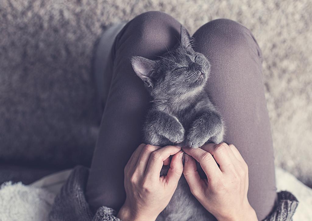 4 cosas raras que aman los gatos