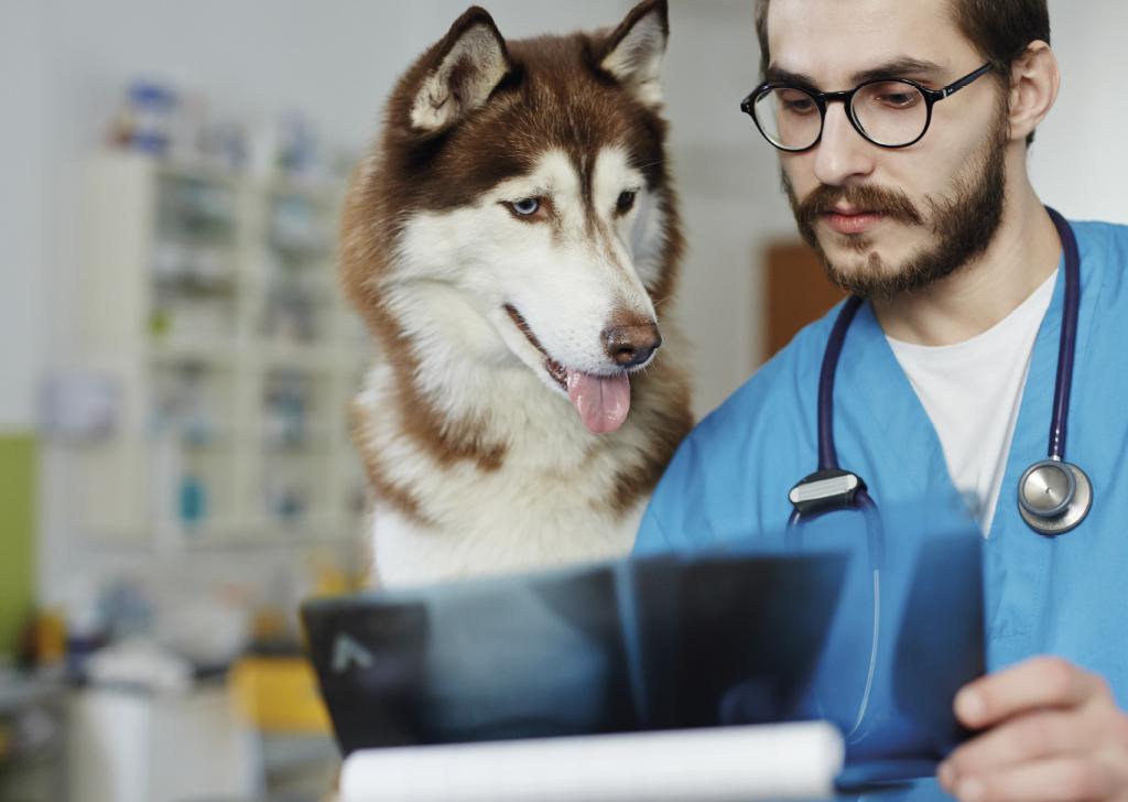 Diagnóstico por imagen en veterinaria, ¿qué pruebas están a nuestra disposición?