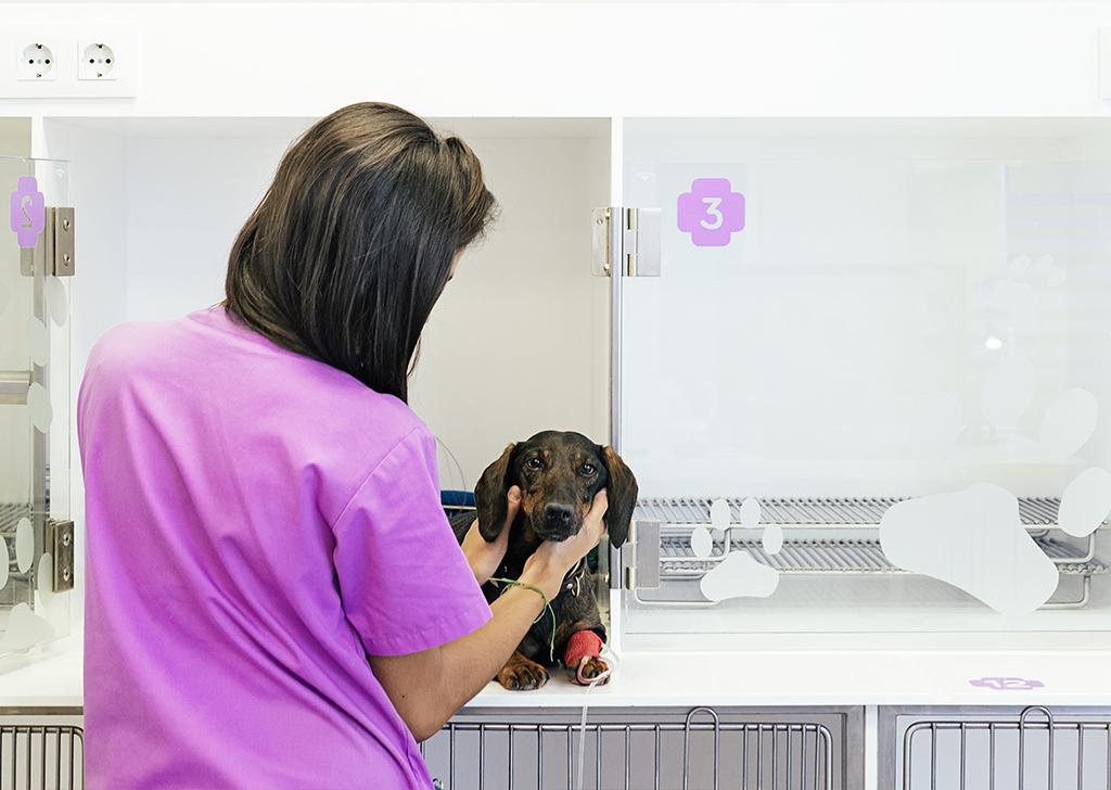 Parvovirus canino: el enemigo de tu cachorro
