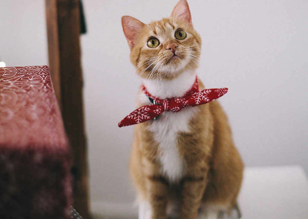 Consejos para una buena adaptación del gato a un nuevo entorno