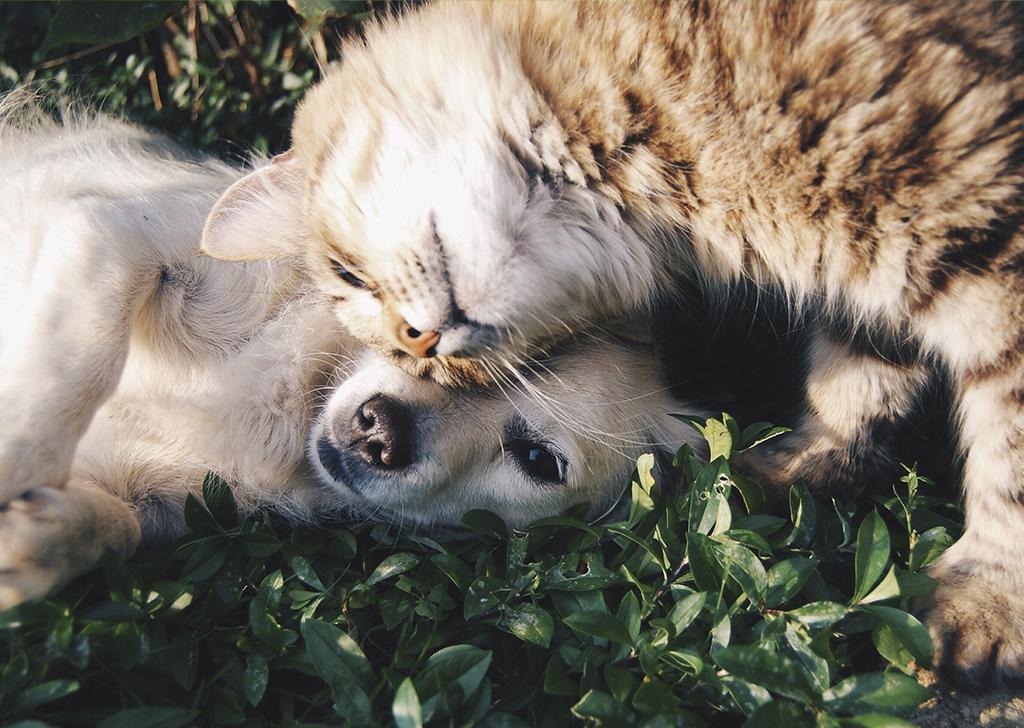 Día Mundial de los Animales, ¿qué podemos aprender de ellos?