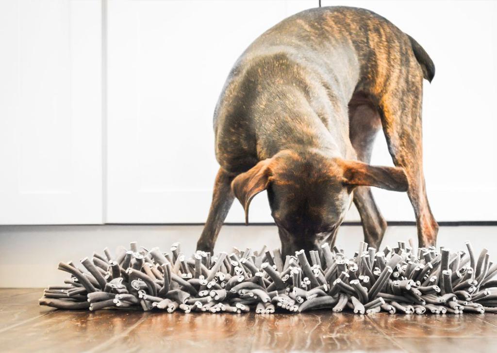 Los perros también necesitan pensar, ¡estimula su mente!