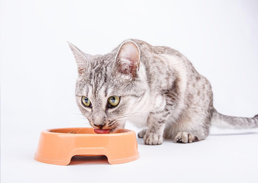 Inmunodeficiencia y leucemia felina, ¿qué debemos saber sobre ellas?
