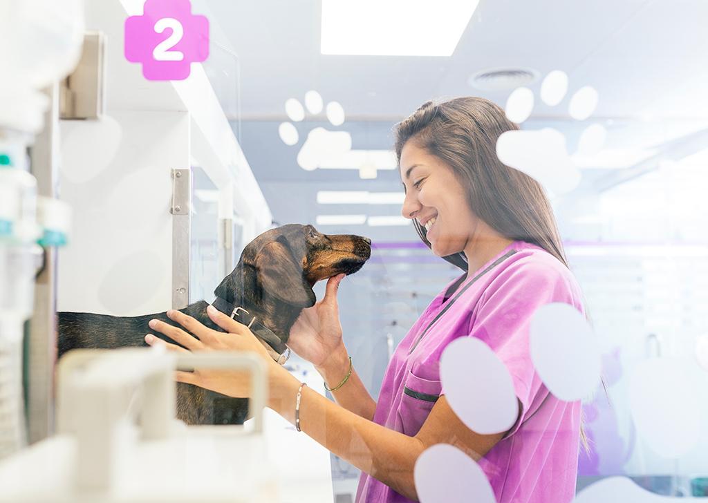 La fiebre en perros y gatos, ¿qué sabes sobre ella?