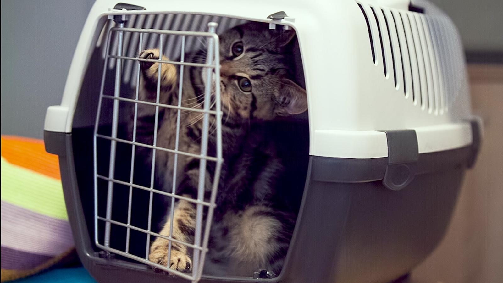 Tipos de transportines, ¿cuál es el más indicado para mi gato?