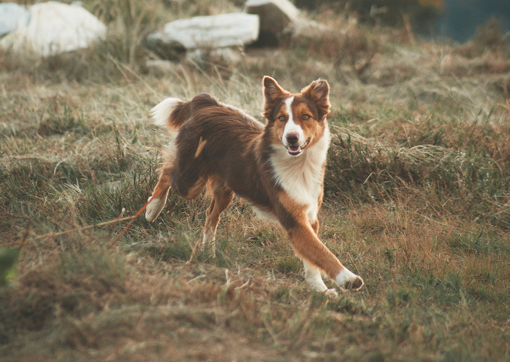 Giardiasis intestinal, causa frecuente de diarrea en perros y gatos