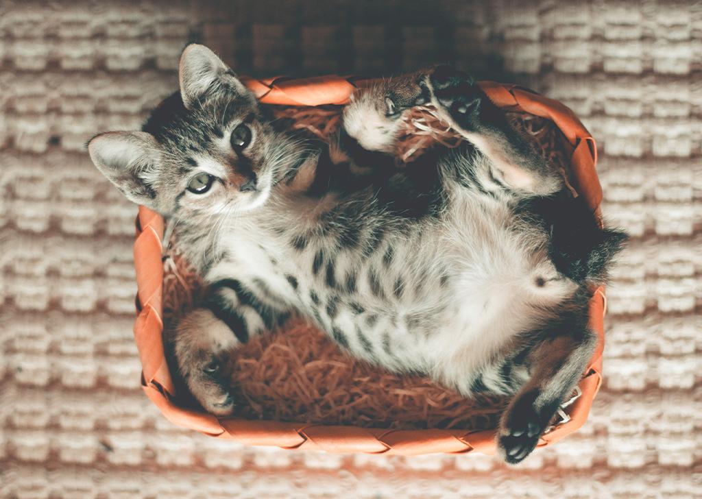 5 curiosidades sobre el ronroneo de los gatos
