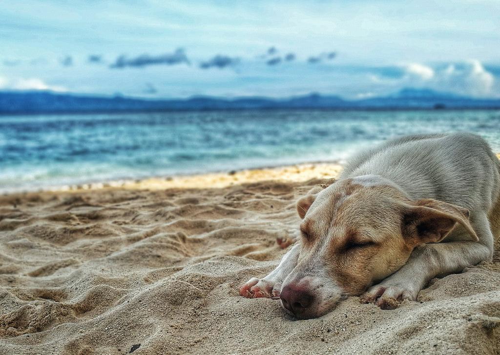 El calor afecta a los hábitos y rutinas de nuestros animales, ¿sabes cómo?