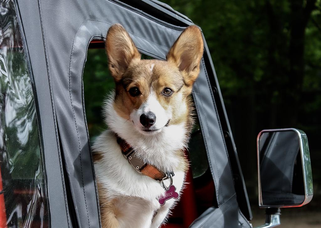 Llegan las vacaciones, ¿qué debe llevar mi perro en su maleta?