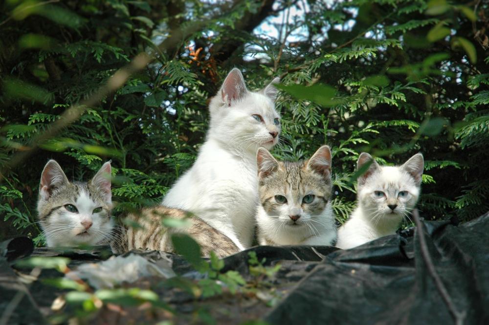 4 Lugares que los amantes de los gatos deben conocer