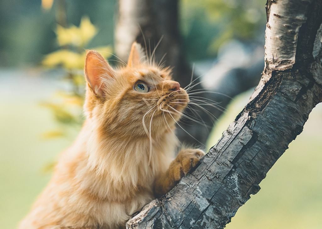 La taurina en los gatos, ¿por qué es tan importante para su salud?