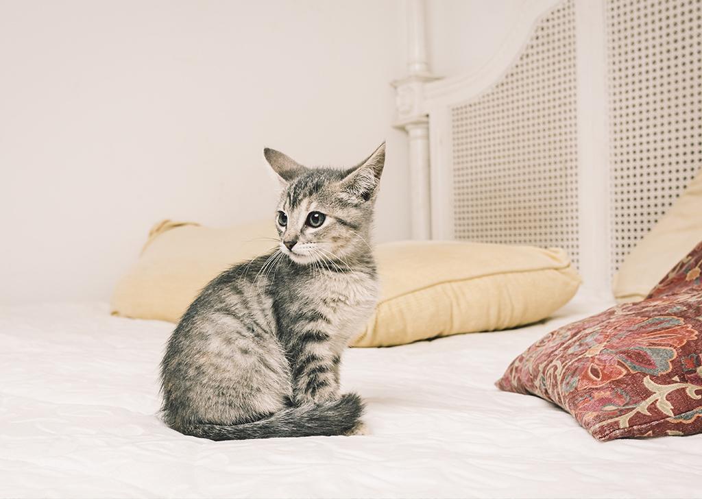 El estrés y la ansiedad en los gatos, ¿sabes cómo detectarlos?