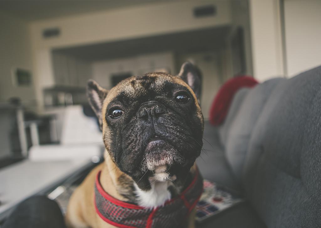 Hipotiroidismo canino, ¿cómo podemos detectarlo?