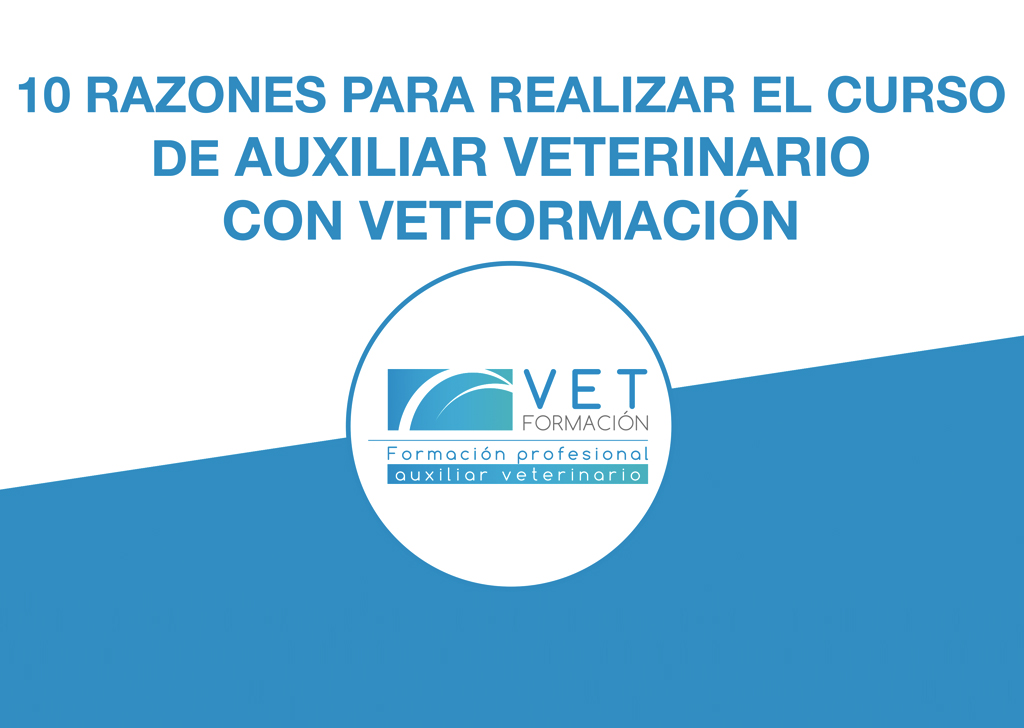 10 Razones para realizar el Curso de Auxiliar Técnico Veterinario con VETFORMACIÓN