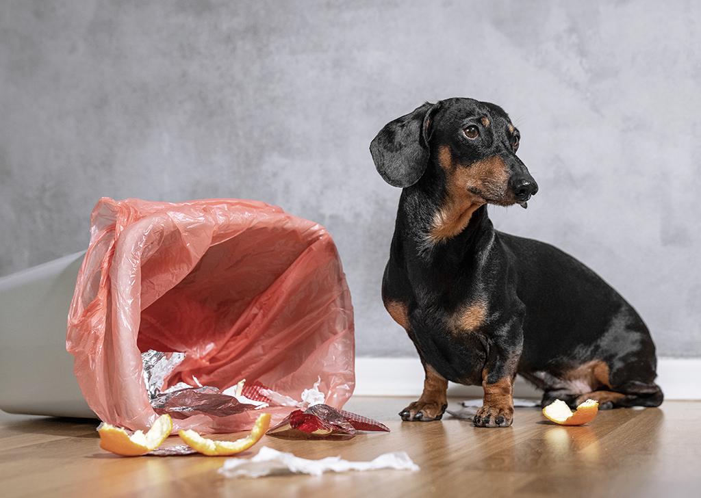 ¿Tu perro abre el cubo de la basura? ¡Puede ser peligroso!