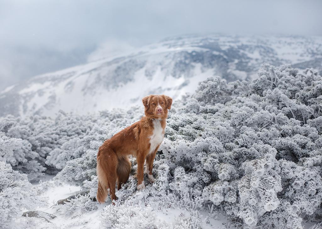 ¿Días de nieve? ¡Atentos a estos consejos para los paseos perrunos!