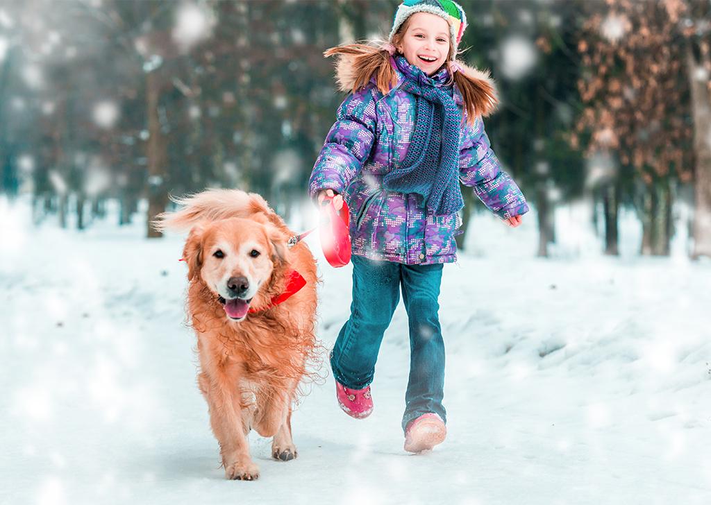 Los animales y el frío, ¿cómo les afectan las bajas temperaturas?