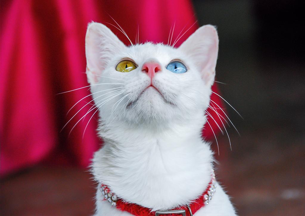 Los ojos de nuestros animales pueden ser especiales… ¿Sabes qué es la heterocromía?
