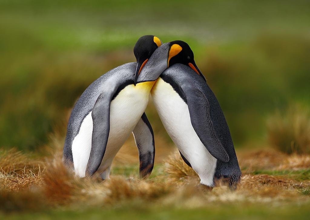 San Valentín: 8 parejas del reino animal que permanecen juntas para siempre