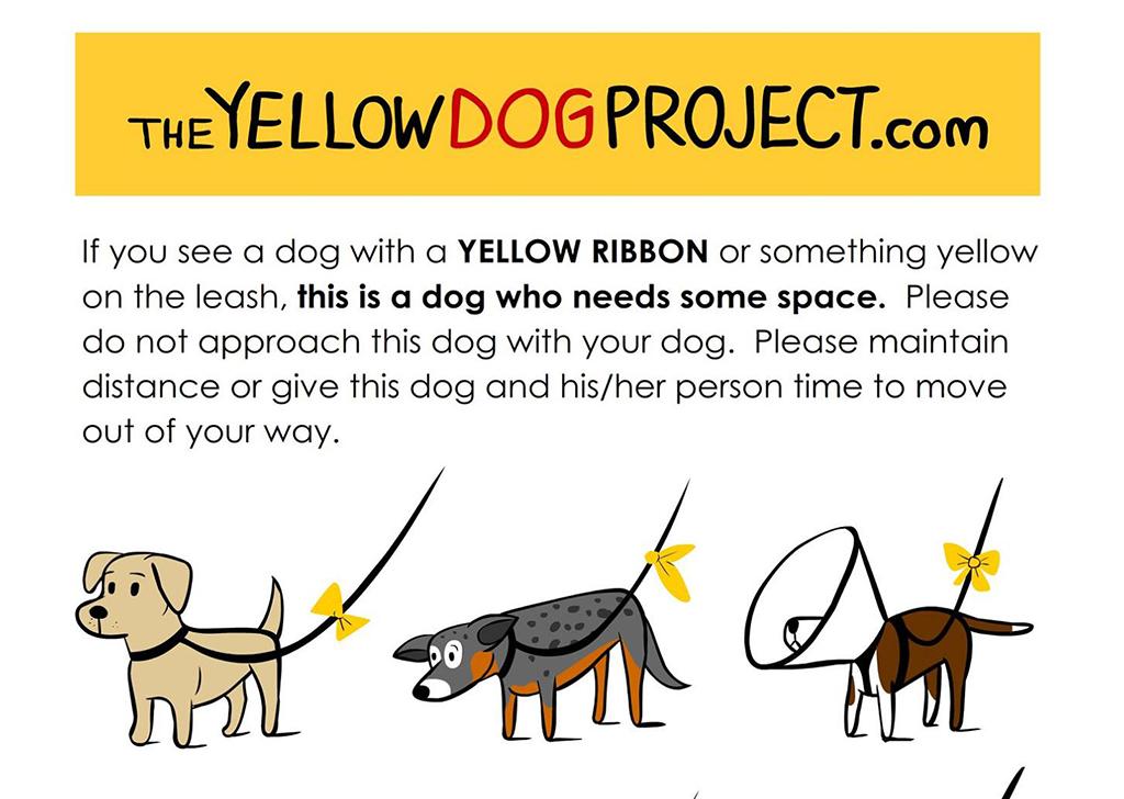 Yellow Dog Project: El código de colores que nos permite dar voz a los perros
