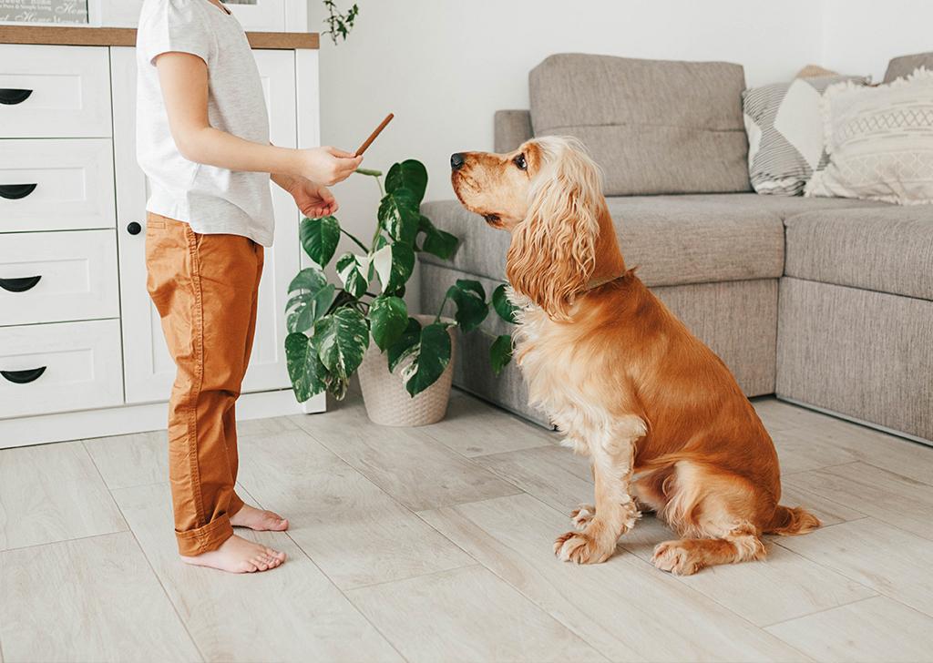 ¿Tu perro tose de manera frecuente? Descubre 5 causas de tos en los perros