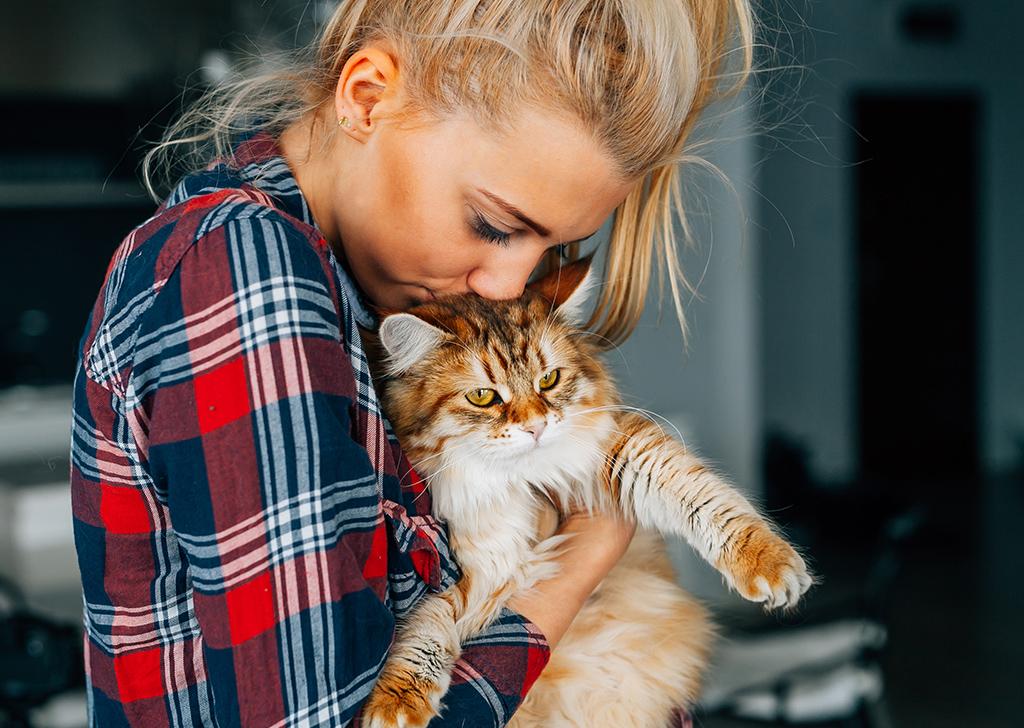 Medicar a un gato, ¿tarea imposible? Te damos varios consejos