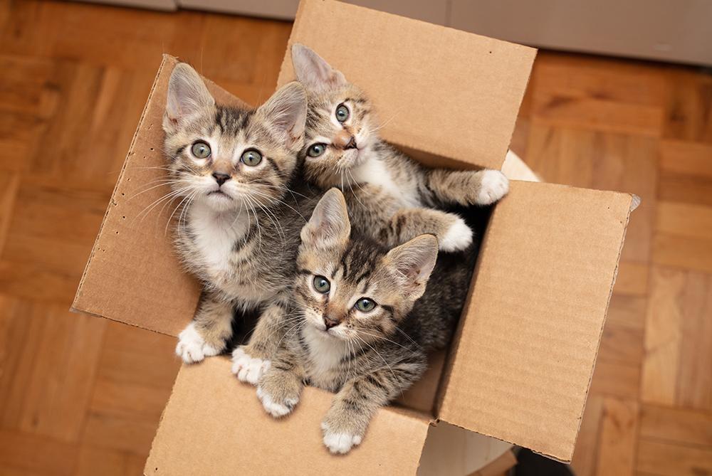 El celo de las gatas, ¿por qué nacen más gatitos cuando llega el buen tiempo?