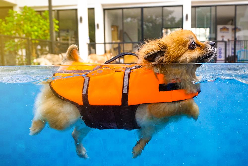 Días de piscina y juegos perrunos, ¿qué debemos tener en cuenta para evitar accidentes?