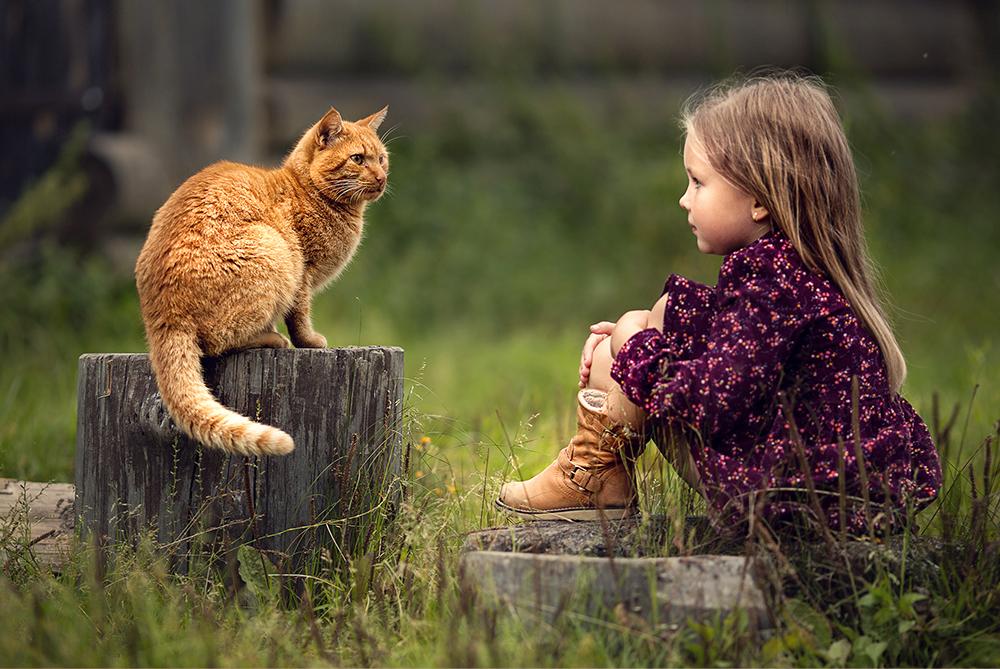 Gatos y personas, ¿cómo es la relación entre nosotros? ¡Feliz Día Internacional de la Amistad!