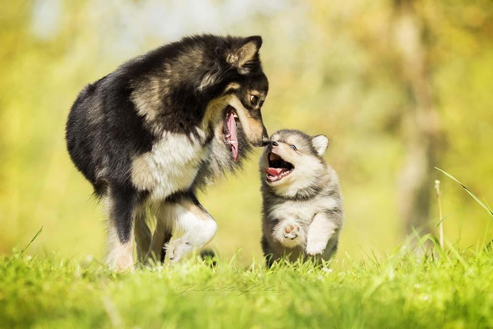 La relación entre cachorros y madres, ¿por qué es importante mantener esa unión durante el tiempo correcto?