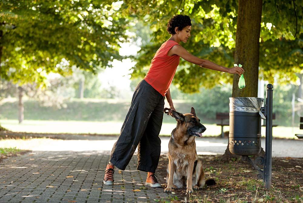 ¿Observas las heces de tu perro o gato? ¡Pueden ofrecernos información sobre su salud!