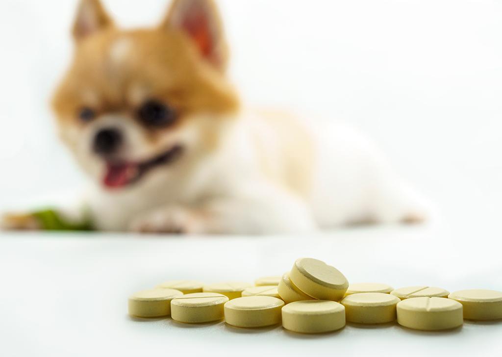 Fármacos que nunca deben tomar nuestros perros