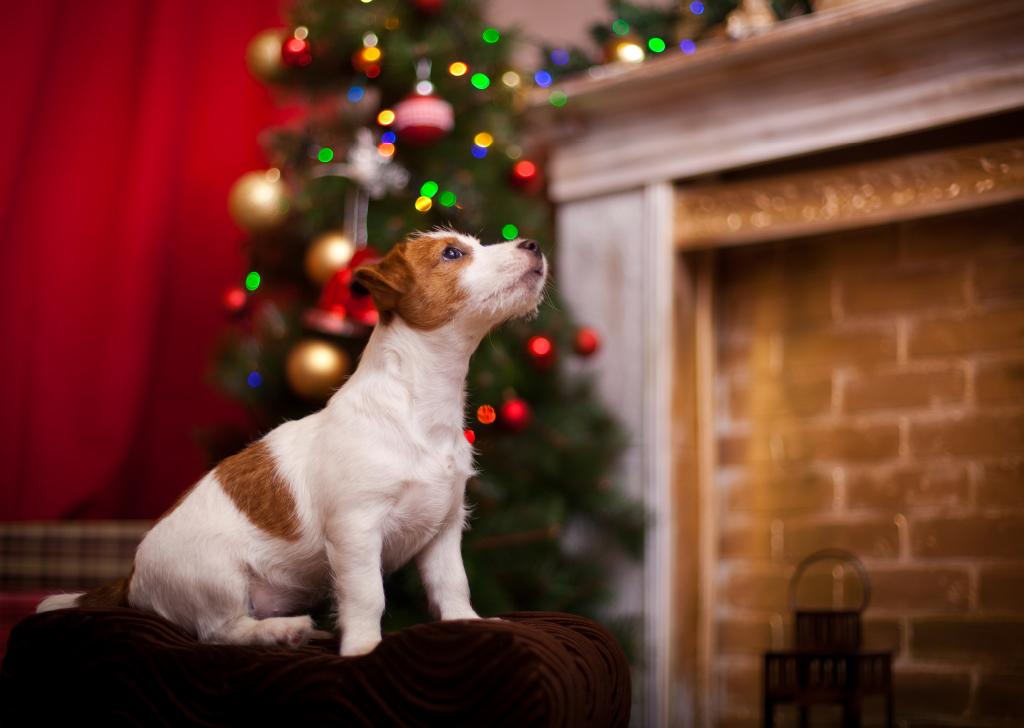 Los peligros de las fiestas navideñas para nuestros animales