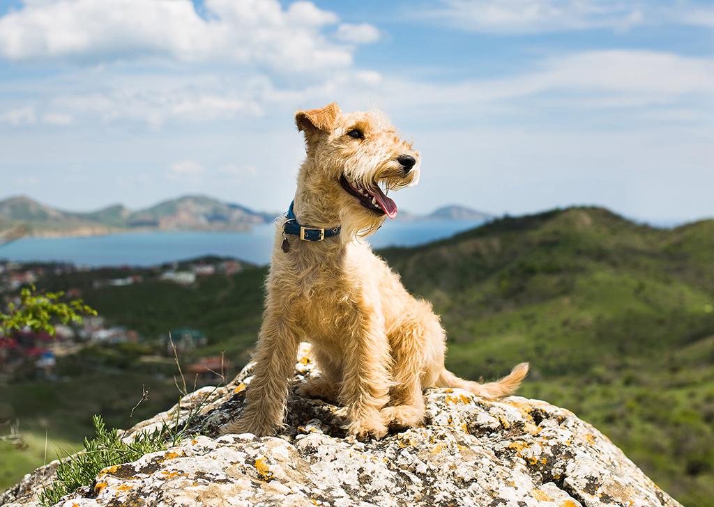 La montaña, la escapada perfecta con nuestros perros
