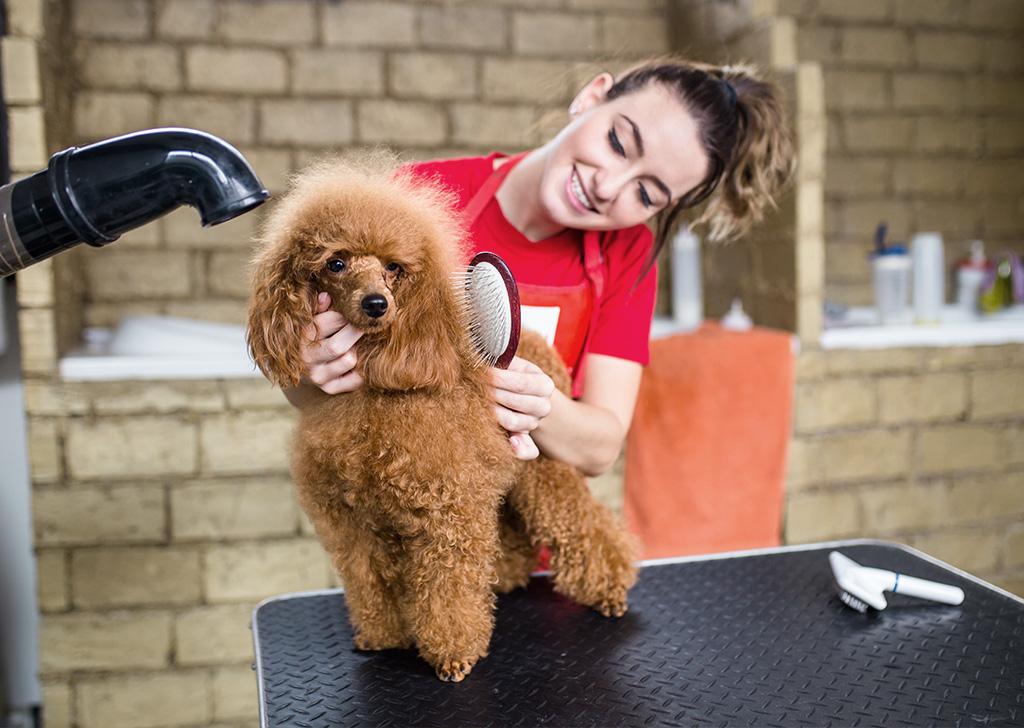 Peluquero canino, una profesión de presente y futuro
