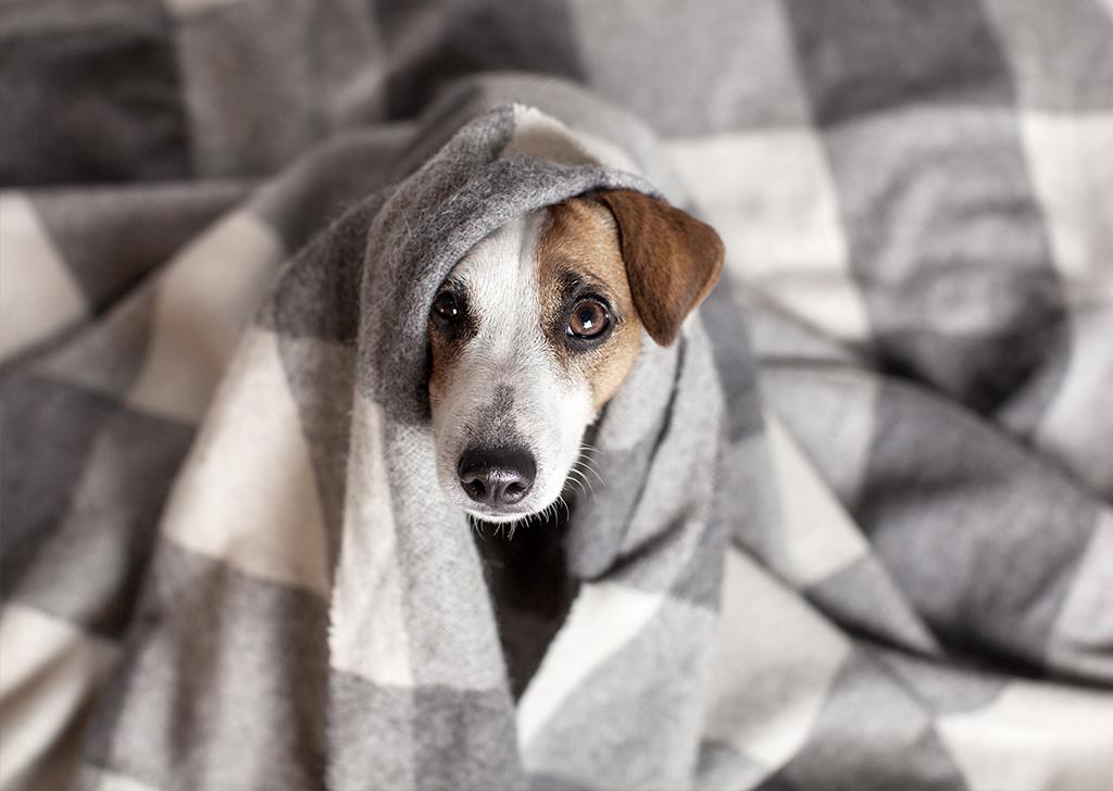 Edad de tu perro: calcula su equivalencia humana