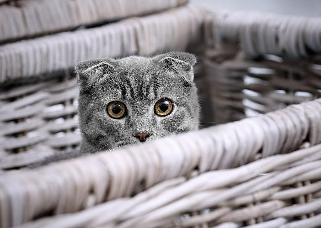 Falsos mitos sobre los gatos