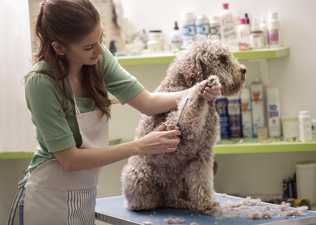 ¿Cómo elegir un buen peluquero canino?