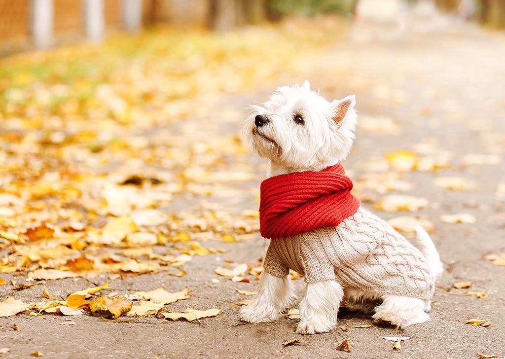 4 razas de perro con tendencia a los problemas de piel y pelo