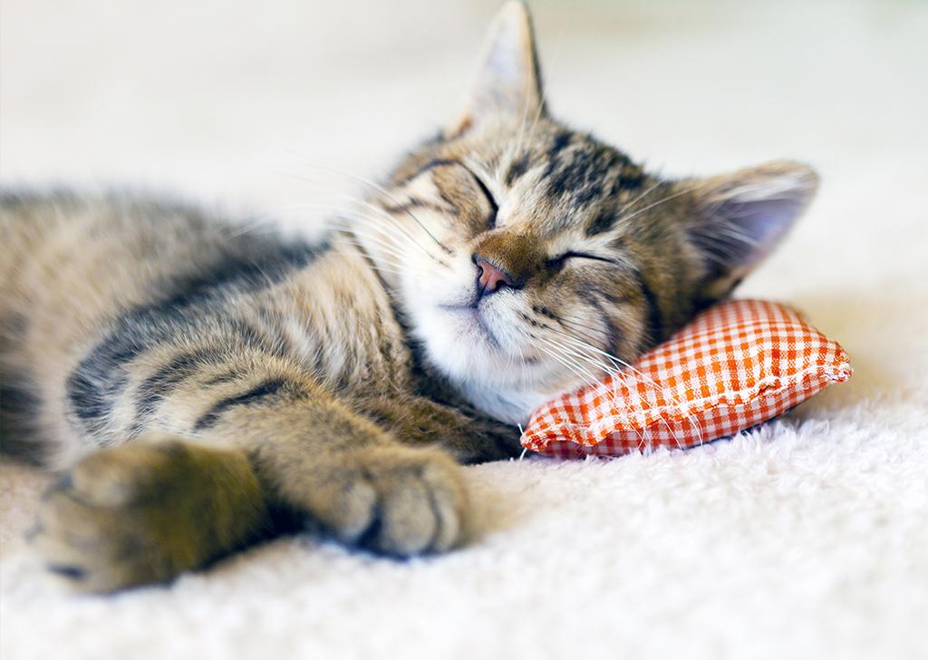 5 comportamientos que indican que nuestro gato puede estar enfermo