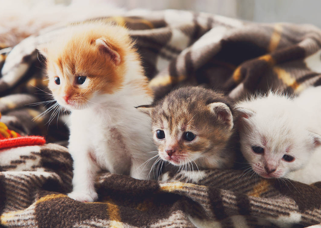 Me he encontrado unos gatitos en la calle, ¿qué debo hacer?